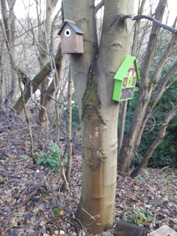 Bird box and bug hotel